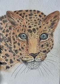 "Pat Dixon : ""The Leopards Stare"" after Vivian Wong"
