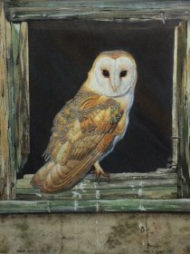"Jean L Grew: ""Barn Owl"""