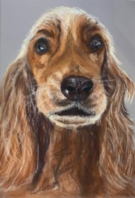 Christine Cox: Cocker Spaniel