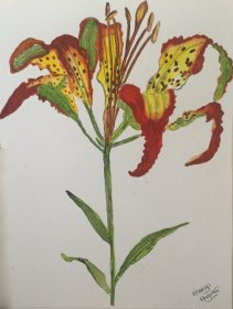 "Margaret Hagues: ""Catesby's Lily"""